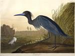 sclaudubon_sclib_audubon_v4_1_p307_full_1806_1339__0_native_thumb.jpg