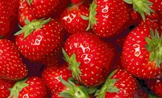 strawberries560x340_thumb.jpg