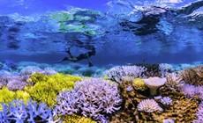 Chasing-Coral-main_thumb.jpg